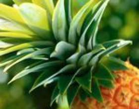 Ананас: склад, властивості і користь ананаса, шкода ананаса, ананас для схуднення фото