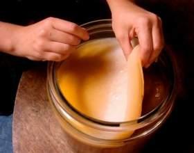 Чайний гриб: протипоказання фото