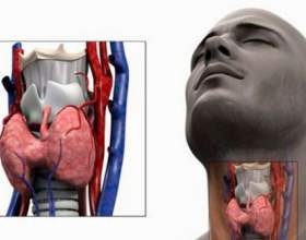 Гормони щитовидної залози ттг, т3, т4: підготовка, розшифровка аналізу і норма фото