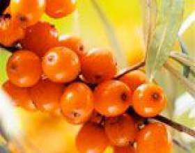 Масло обліпихи: користь, властивості, лікування маслом обліпихи, масло обліпихи в косметології фото