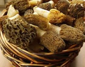 Як приготувати гриби сморчки? фото