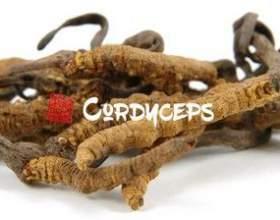 Кордицепс - цілющий гриб з китаю фото