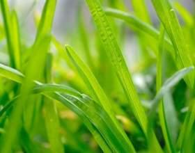 Лікарські трави від безсоння фото