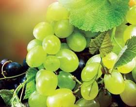 Чи можна вагітним виноград? Як вибрати виноград для вагітних? фото