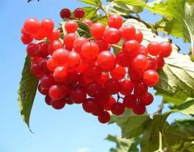 Осінні ягоди. Рецепти з осінніх ягід фото