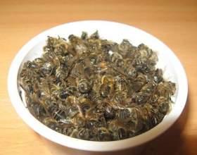 Бджолиний підмор: застосування і лікування фото