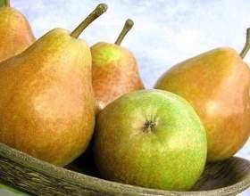 Чому не плодоносить груша? фото