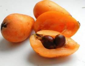 Корисні властивості фрукта мушмули фото