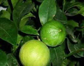 Застосування олії бергамоту фото