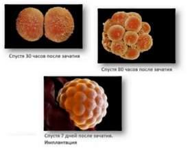 Розмір ембріона по тижнях таблиці з описом. Як визначають розміри плоду по тижнях вагітності за допомогою узд? фото