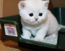 У кота пронос: що робити і чим лікувати? Поради ветеринарів і необхідних заходів профілактики фото