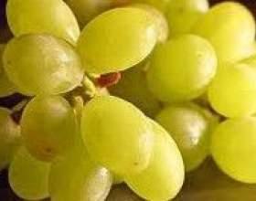 Виноград. Калорійність, користь, дієти фото