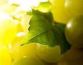 Виноград, користь і властивості винограду, виноград в косметології, виноградний сік, виноградна дієта фото